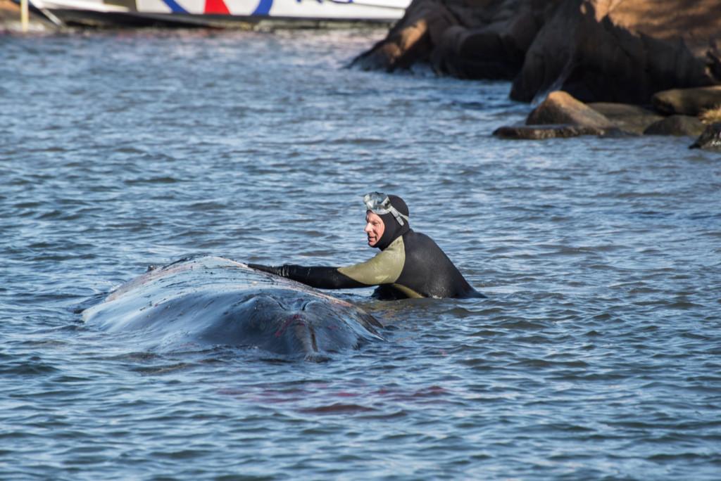 Ikke hver dag man kan klappe en hval