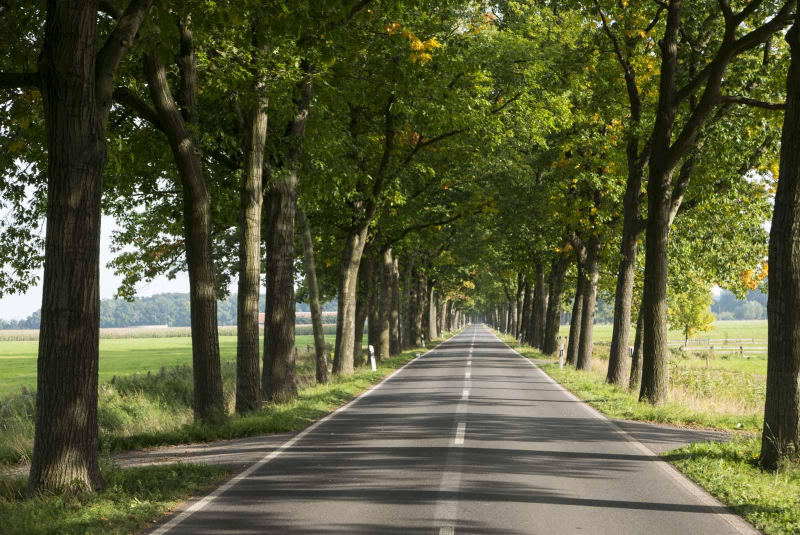 Flotte veier med trær som danner en allé er vanlig i denne delen av Tyskland