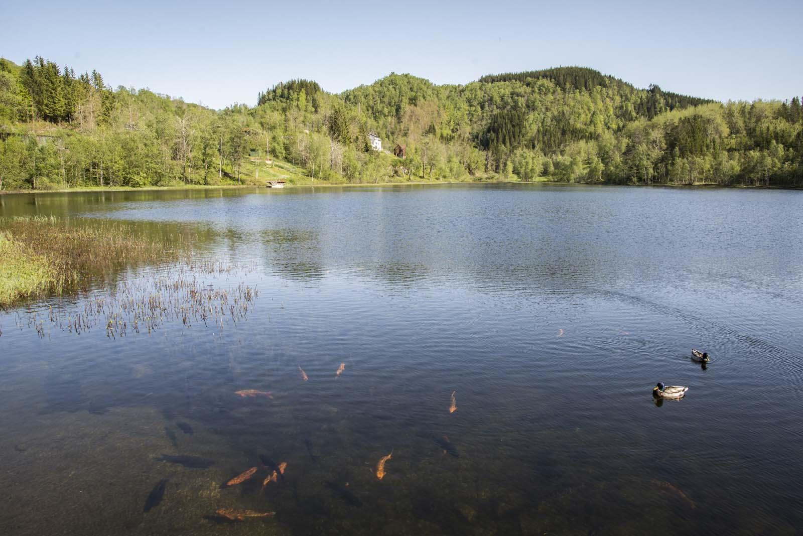 Skårsvatnet er både idyllisk og fiskerikt