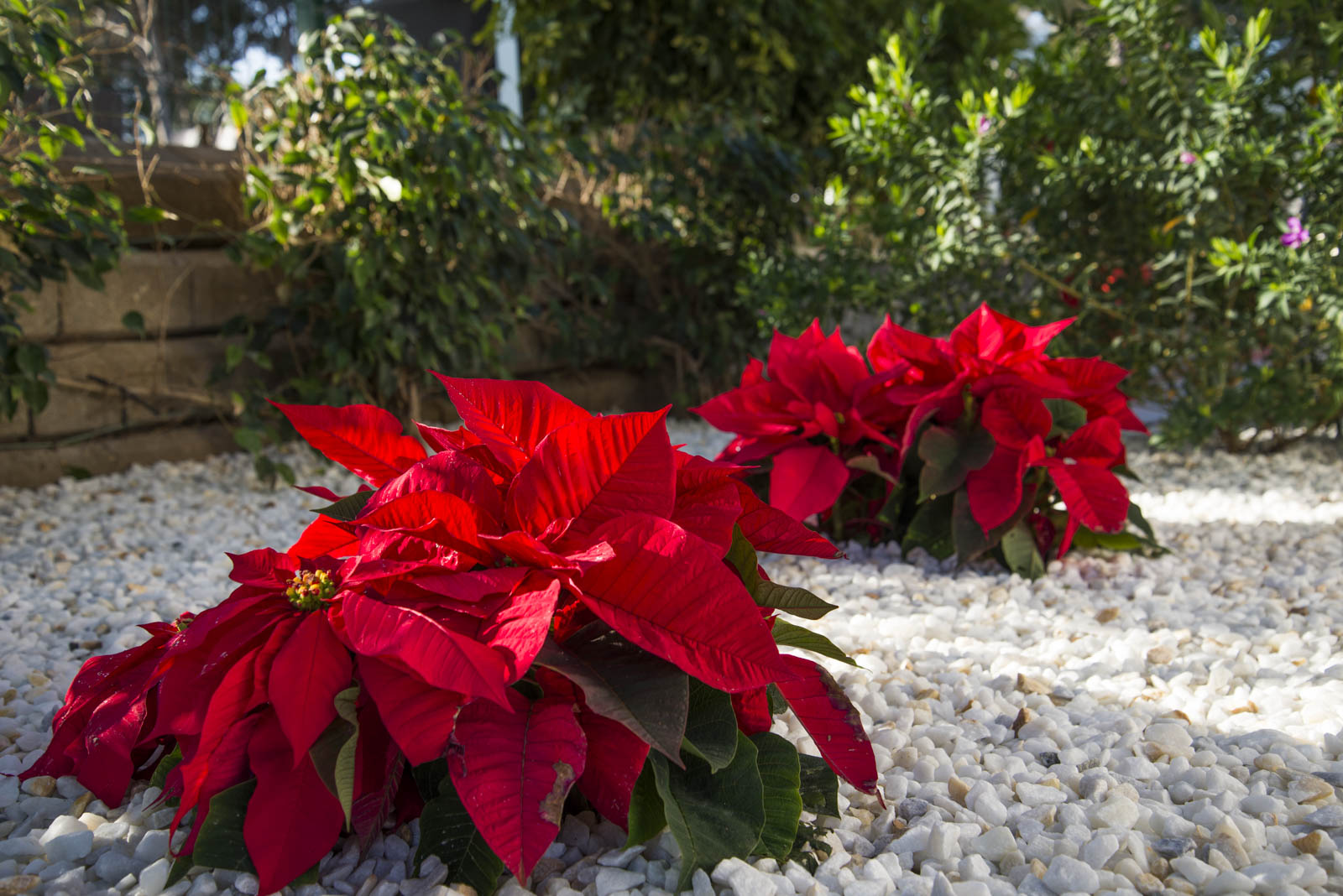 Grøntanleggene og blomsterbedene holder svært høy standard