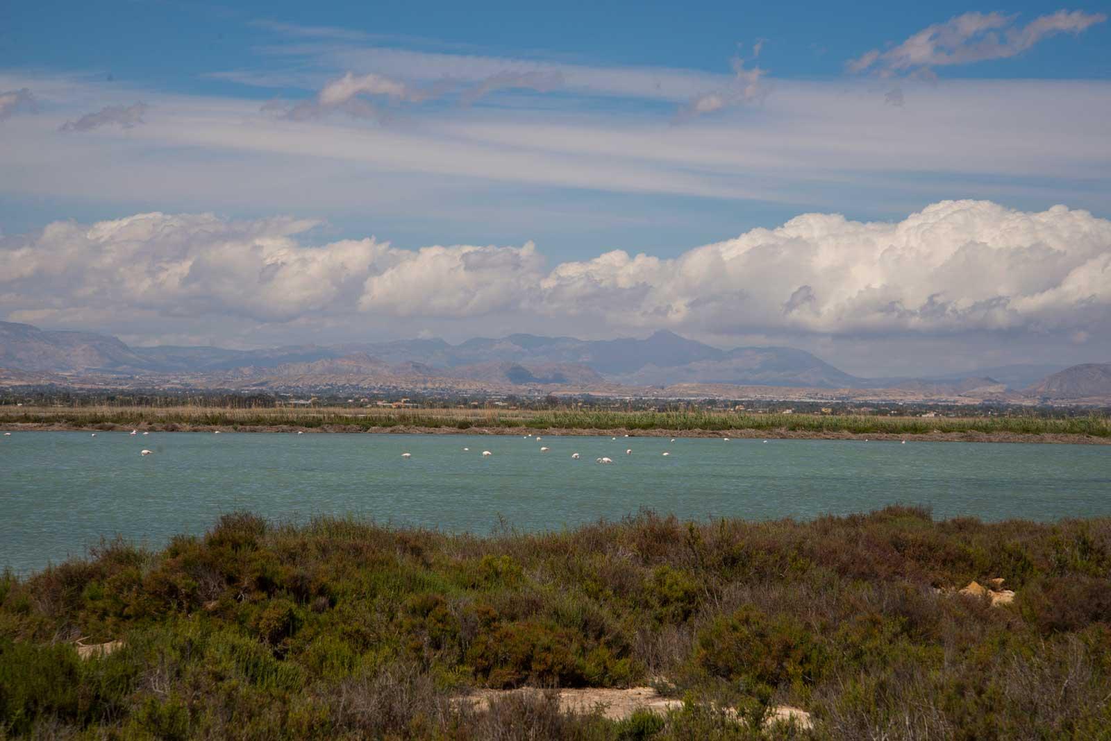Mellom Alicante og Torrevieja ligger det store saltsjøer. Mange fugler utpå der, jeg tror det var flamingoer